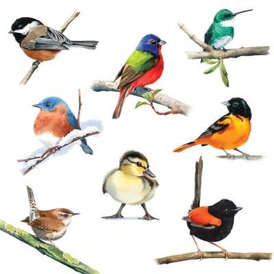 bird-studies-jpg