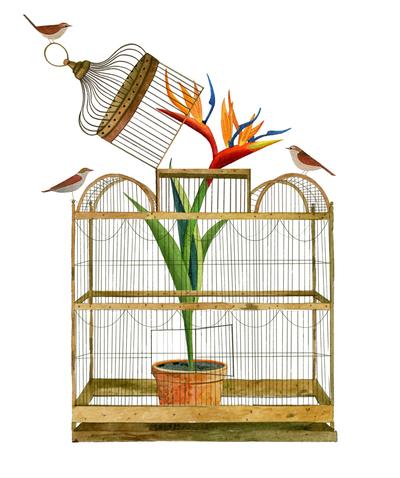 flower-cage-birds-jpg