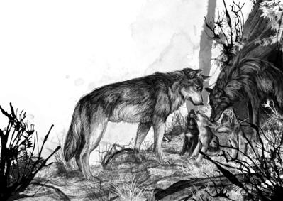 monicaarmino-wolfwander16-jpg