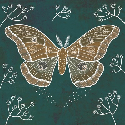 sylwia-filipczak-moth-2-jpg