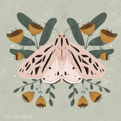 pink-moth-web-jpg