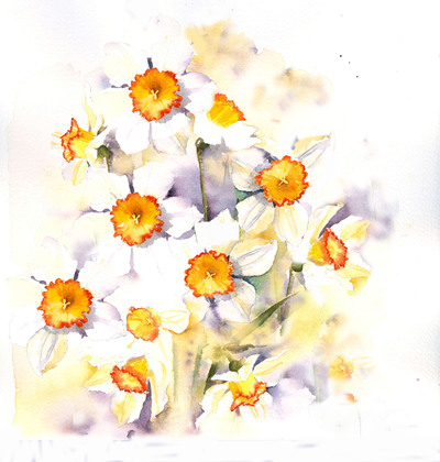 spring-has-sprung-daffs-jpg