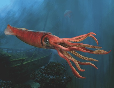 giant-squid-jpg