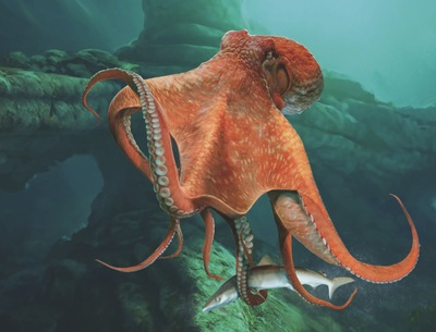 north-pacific-giant-octopus-jpg