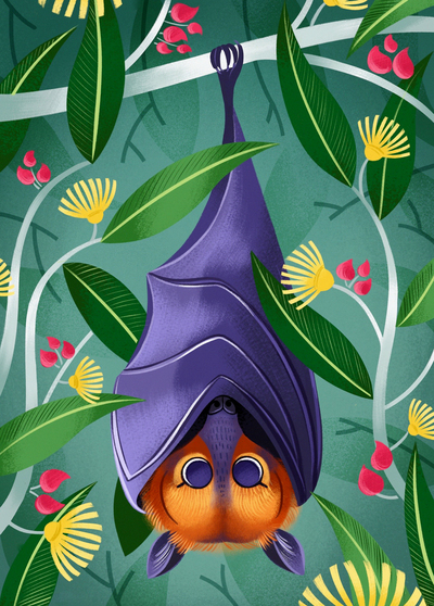 flying-fox-bat-australia-flowers-gumtree-jpg