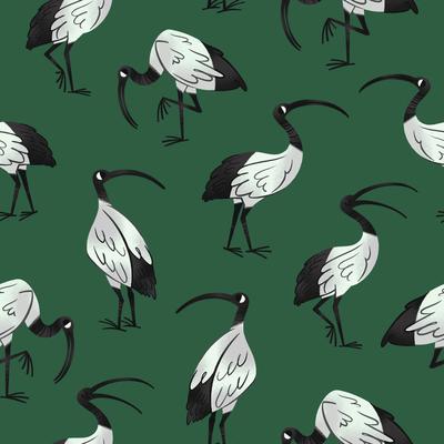 ibis-bird-australia-pattern-jpg