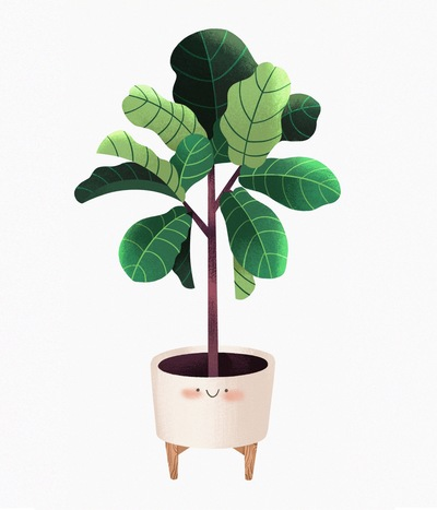 plant-fiddleleaf-fig-leaves-jpg