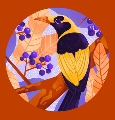 regent-bower-bird-australia-jpg