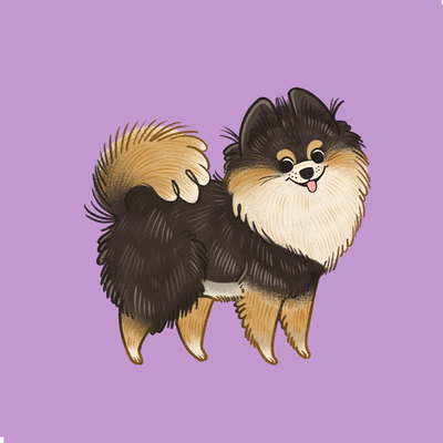 pomeranian-dog-puppy-animal-jpg