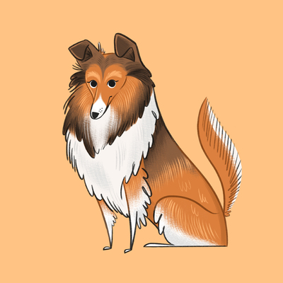 roughcollie-dog-puppy-animal-jpg