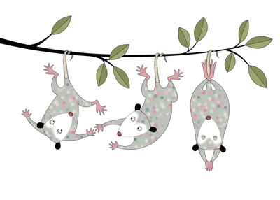 possum-babies-swinging-jpg
