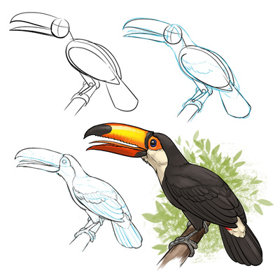 arcturus-ready-set-draw-wild-animals-toucan