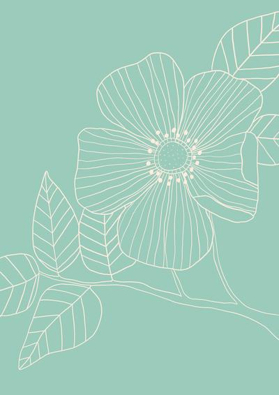 ap-floral-drawing-botanical-study