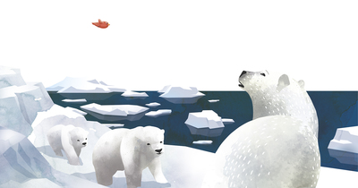 little-bird-around-the-world-polar-bear-jpg-1
