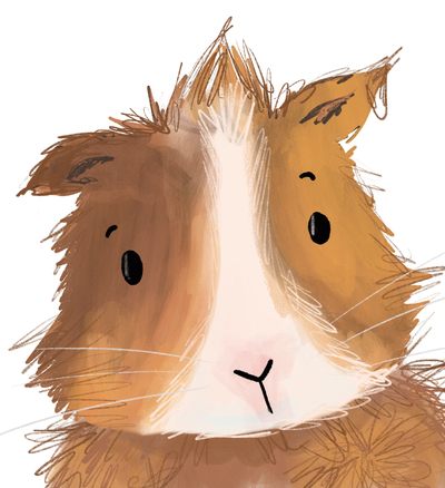 guinea-pig-jpg