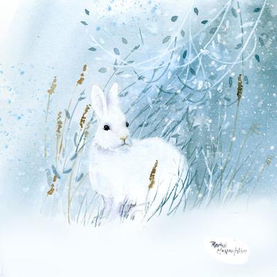 white-mountain-hare-hare-jpg