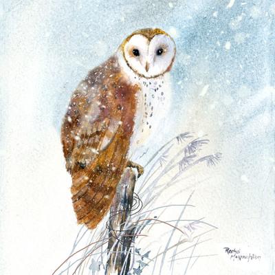 owl-2-jpg