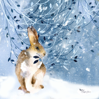mountain-hare-jpg