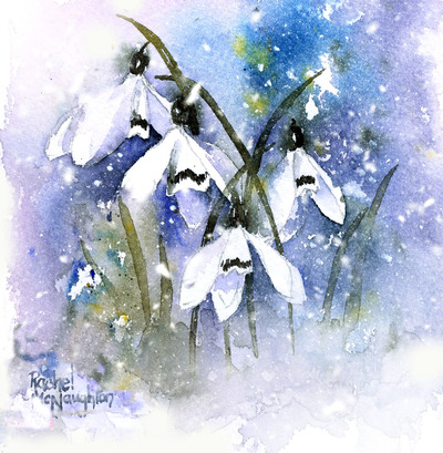 snowdrops-and-snow-on-blue-jpg
