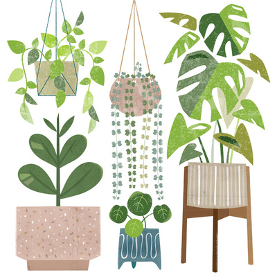 houseplants-lr-jpg