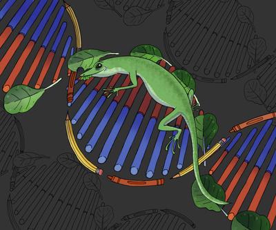 editorial-lizard-dna-jpg