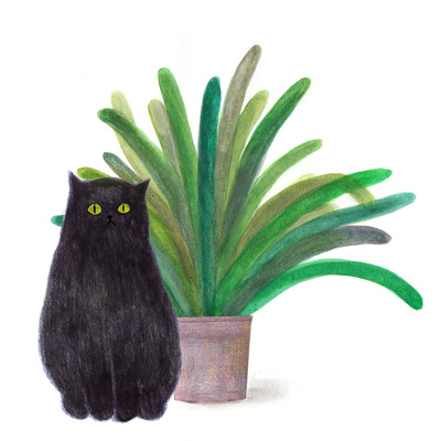 black-cat-and-a-plant-jpg
