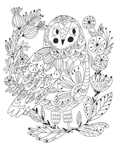 coloring-book-illustration-owl-jpg