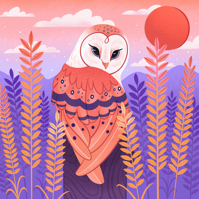 owl-barn-owl-bird-sunset-nature-animals-pink-jpg