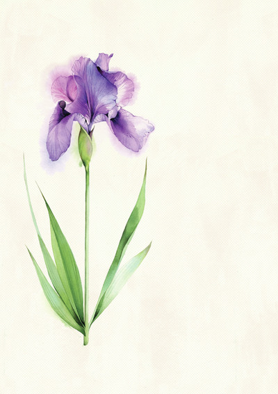 iris-jpg-2