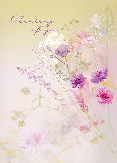 lsk-hazy-meadow-floral-cornflower-field-jpg