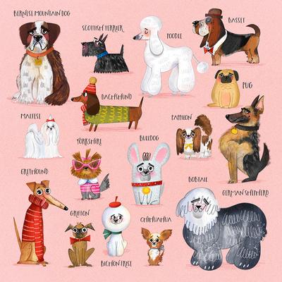 dog-breeds-sceene-marusha-belle-jpg