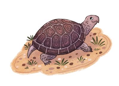 turtle-sand-animals-reptile-pet-michellesimpson-jpg