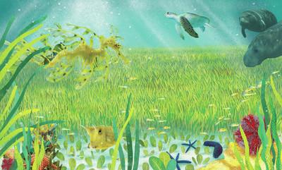 claire-mcelfatrick-dk-seagrass-meadows-jpg