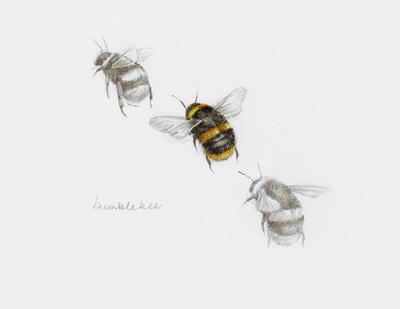 bumble-bee-artwork
