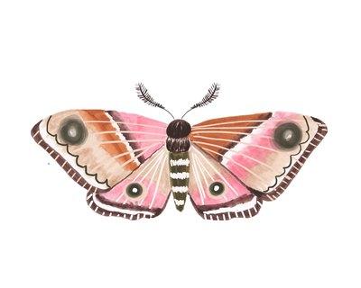 moth1-jpg