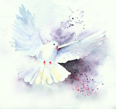 white-dove1-jpg