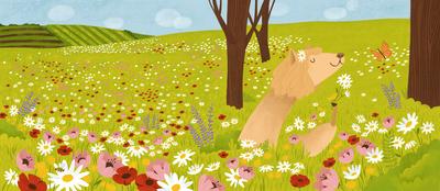 alpaca-smelling-flowers-jpg