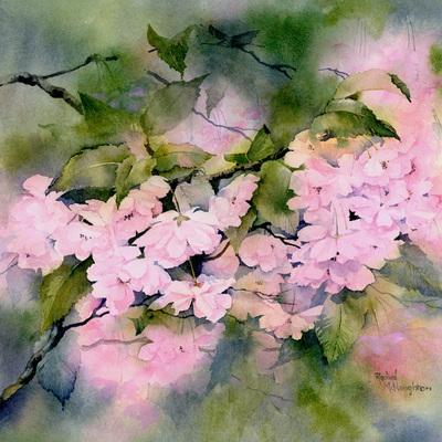 cherry-blossom-jpg