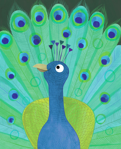 peacock-feathers-jorooks-jpg