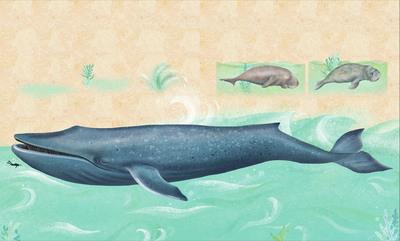 claire-mcelfatrick-dk-ocean-mammals-jpg