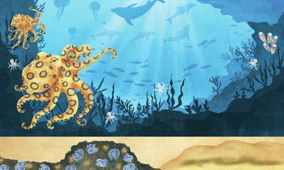claire-mcelfatrick-dk-octopuses-jpg