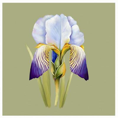 botanical-design-5-01-jpg