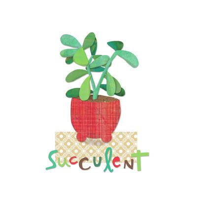 ad4146a-succulent-pot-plant-jpg