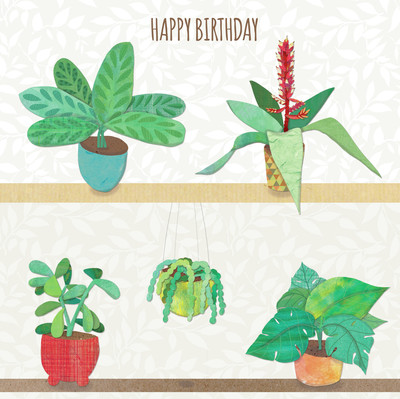 ad4145a-pot-plants-jpg