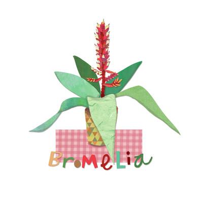 ad4142a-bromelia-pot-plant-jpg