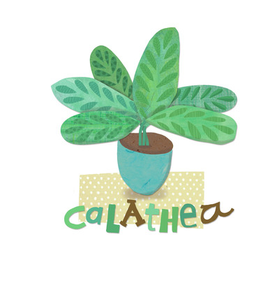 ad4141a-calathea-pot-plant-jpg