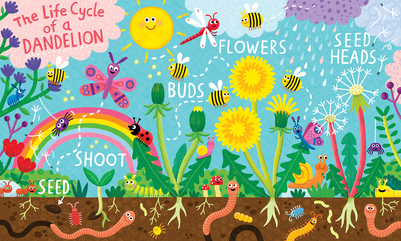 dandelion-lifecycle-jpg