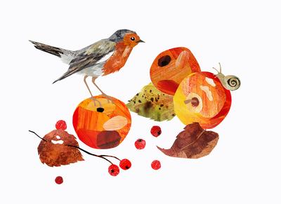 apples-robin-autumn-jpg
