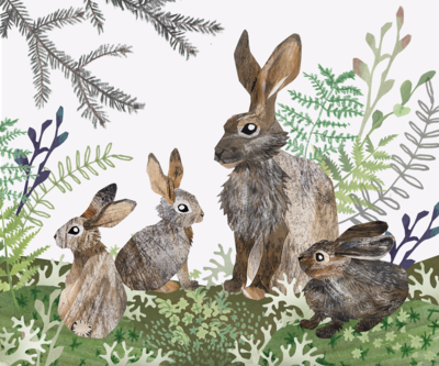 hares-herbage-forest-jpg