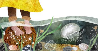 jellyfish-sea-stones-seaweed-jpg
